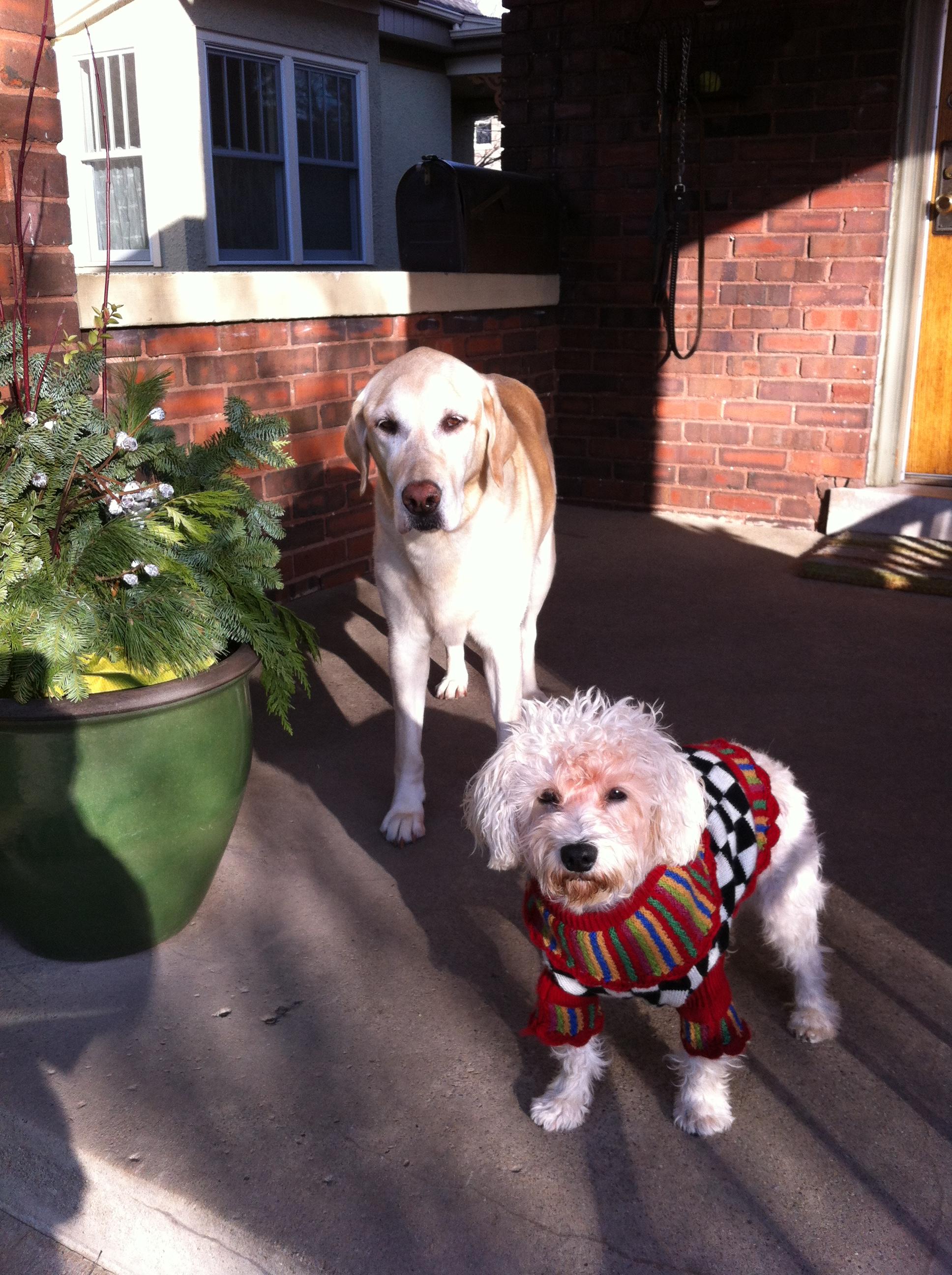 sweaterdogs
