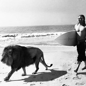 Man and lion on beach