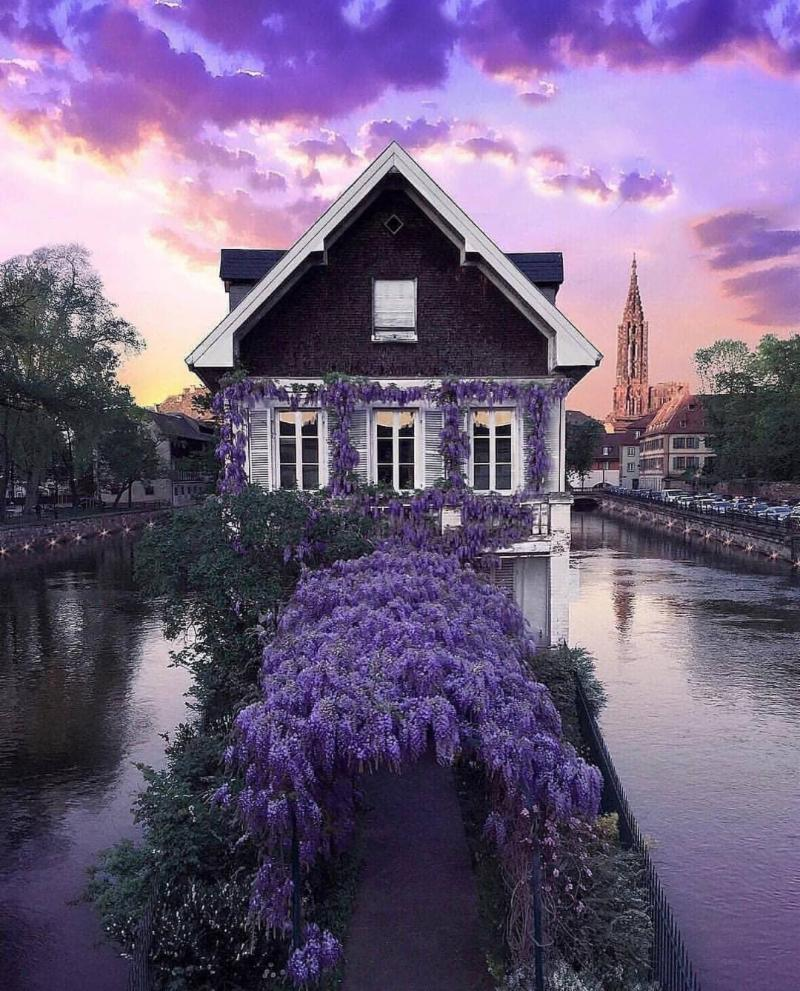 Charming House Exterior with violet sky and many flowers